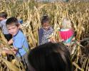 kukoricaszedés 003.jpg