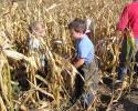 kukoricaszedés 004.jpg