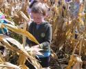 kukoricaszedés 007.jpg