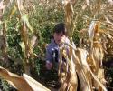 kukoricaszedés 008.jpg