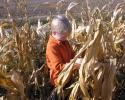 kukoricaszedés 009.jpg