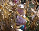 kukoricaszedés 012.jpg