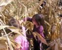 kukoricaszedés 013.jpg