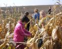 kukoricaszedés 014.jpg